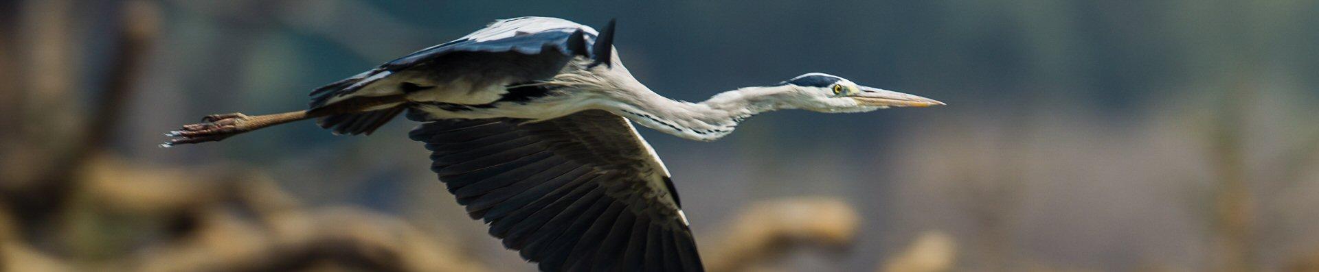 heron01